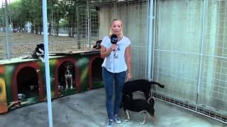 A dog peed 3 times on a tv reporter -Un caine se usureaza de 3 ori pe reporterita