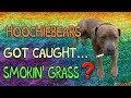 hoochiebears got caught smokin' grass!?
