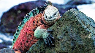 STRANGEST Creatures of the Galapagos Islands !