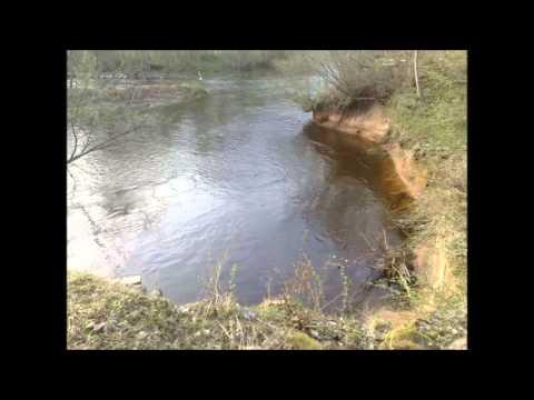 Paul Randmaa metsavendade salga hümn