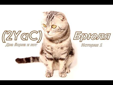 Два йорка не считая кота. История 1: как всё началось. Two Yorks Not Counting The Cat. Story 1.