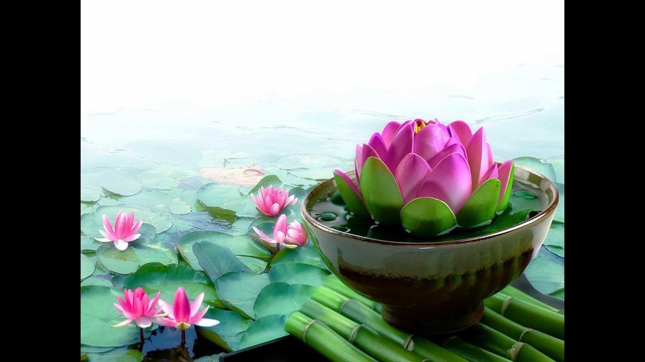 Pink Lotus Live Wallpaper Youtube
