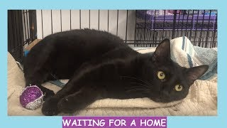 Cat Adoption Fair - Sweet Cats & Kittens Waiting to Find Loving Homes