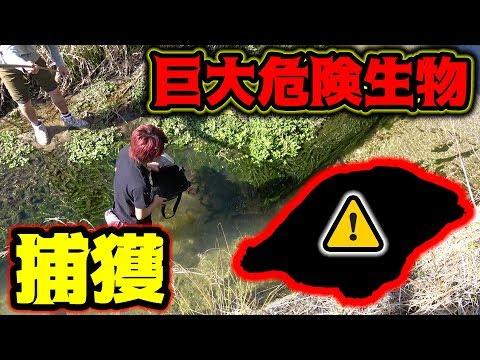 【衝撃】小魚を釣りに行ったらとんでもない生物に遭遇した・・