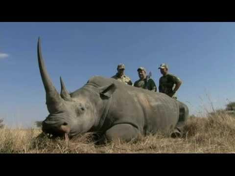 White Rhino - Witkop Safaris