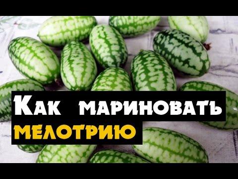 Вопрос: Мелотрия. Какой размер, вес плодов, какая урожайность с одного растения?