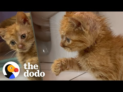 Tiny, Shaking Kitten Decides To Learn How To Run | The Dodo Adopt Me!