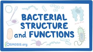 Bacterial Structure and Functions
