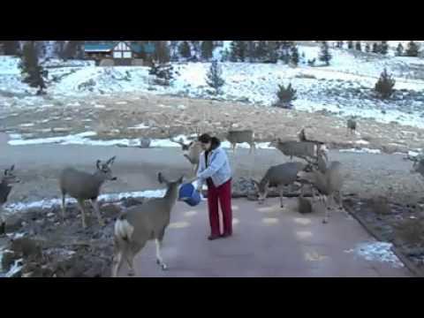 Deer Flock to Woman's Doorstep to Feed