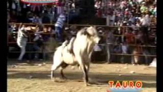 Jaripeo en Ihuatzio,Mich...4 Ganaderías vs Elegantes del Andariego