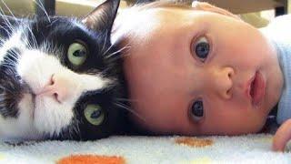 Lucu Banget Kucing Dan Bayi Ini Bisa Bermain Bersama 😊