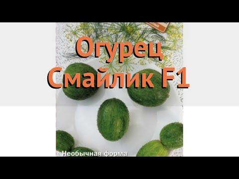 Огурец обыкновенный Смайлик F1 (smaylik f1) 🌿 Смайлик F1 обзор: как сажать, семена огурца Смайлик F1