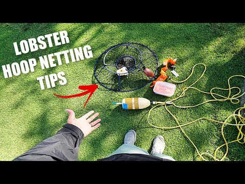 California Spiny Lobster Tips (What You Need To KNOW)