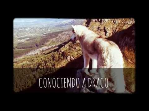 DIA 2 // CONOCIENDO A DRACO! ALASKAN MALAMUTE