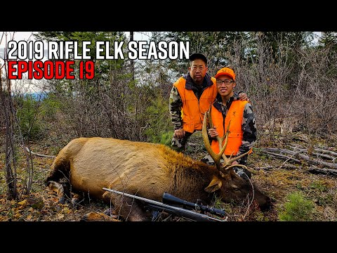 First Bull Down! - Washington OTC Rifle Elk Hunt | 2019 Hunting Season EP.19