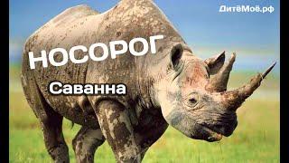 Носорог. Энциклопедия для детей про животных. Саванна
