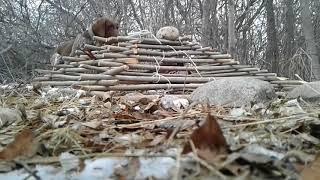 Поймал фазана живём (пирамида )