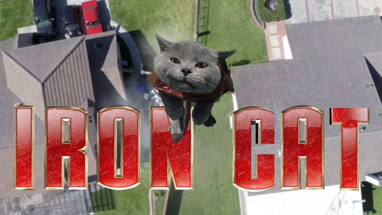 Gif Aaron Cat