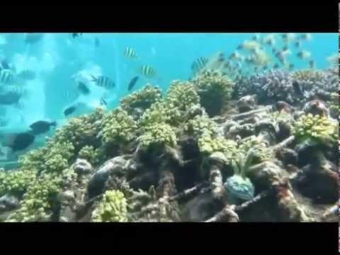 Wisata Bawah Laut Dan Tanam Terumbu Karang Dengan Seawalker