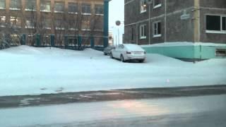 видео Песец. Песец в Мурманской области