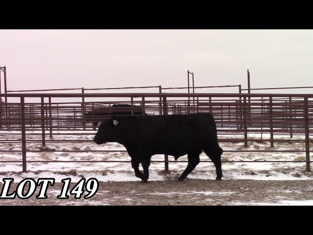 Mead Angus Farms Lot 149