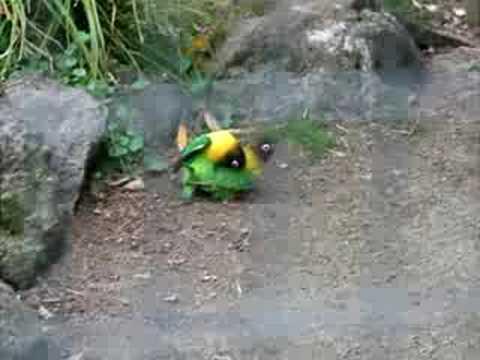 Zoos porn