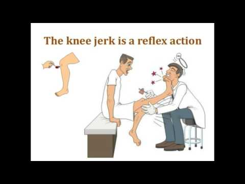Deep tendon reflex | Knee Jerk Reflex Test | patellar reflex - YouTube