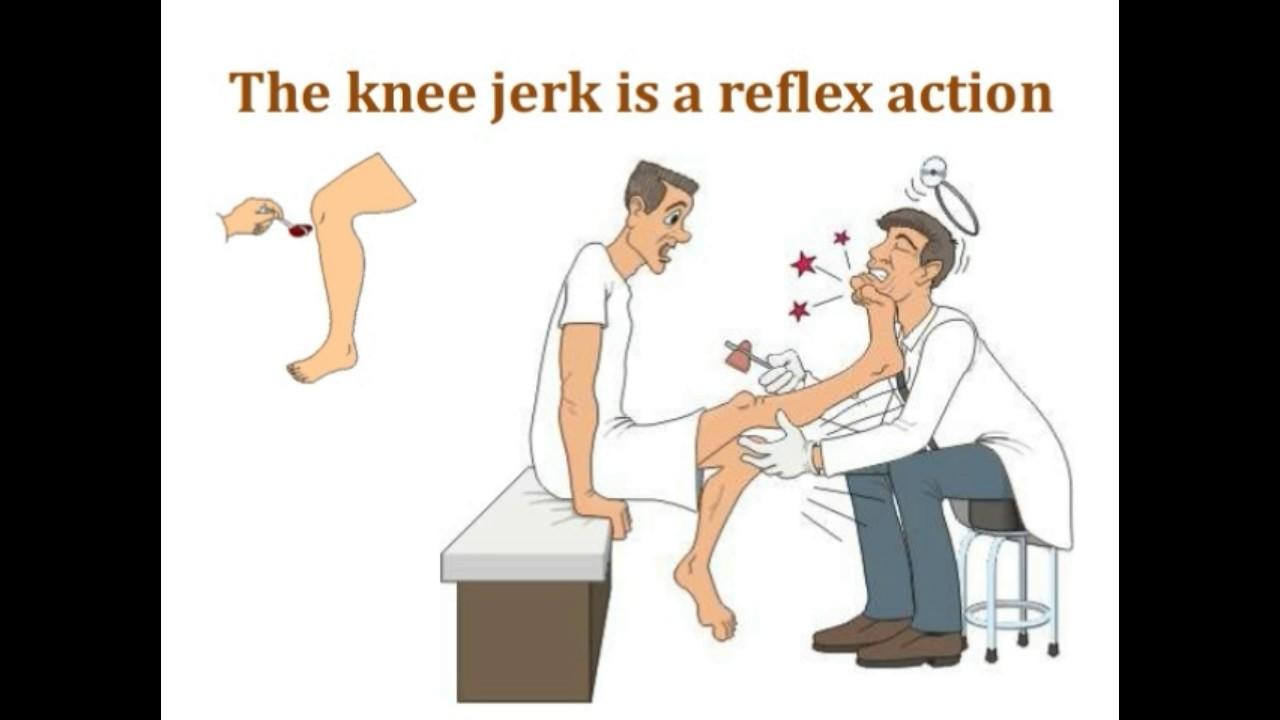 Deep tendon reflex | Knee Jerk Reflex Test | patellar reflex