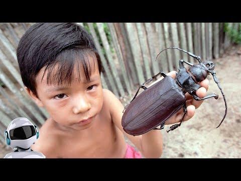 Вопрос: Как называется таракан с крыльями?