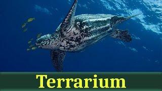 Кожистая черепаха, лут (лат. Dermochelys coriacea)