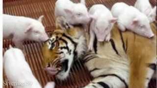 Odd but Lovely Friendship between Animals