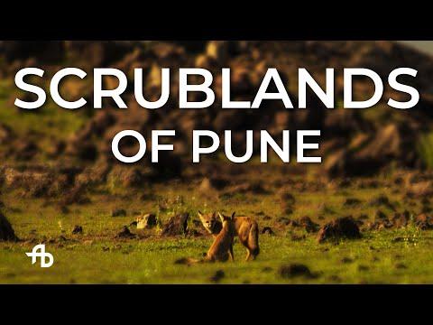 Grasslands of PUNE | Wildlife Photography | AJINXD Artist