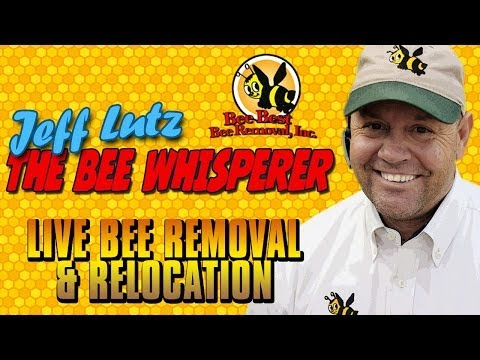Bee Best Bee Removal -Live Removal and Relocating to new bee hive