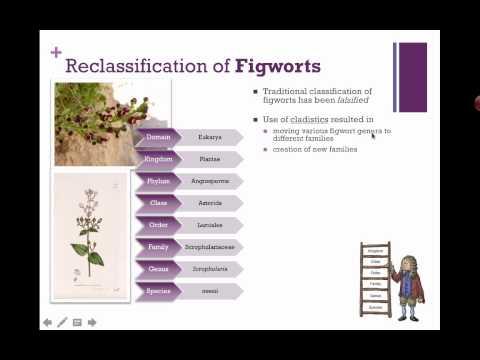 Reclassification of Figworts (IB Biology) (2015)