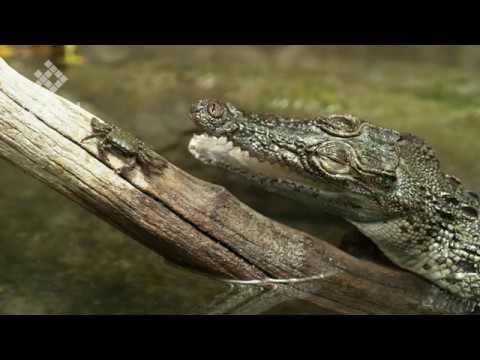 Biopixel Phantom 4K Flex Natural History slow motion showreel