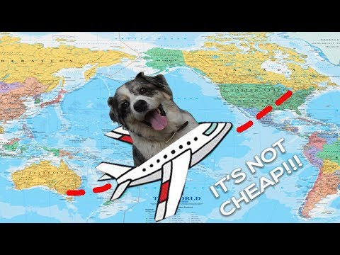International Travel With A Pet | How To Get Your Dog On A Plane