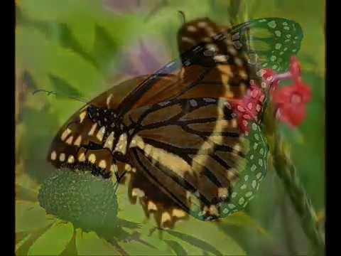 Buborék együttes - Pillangó letöltés