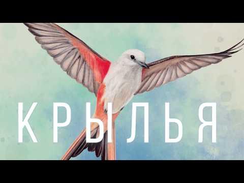 Крылья - играем в настольную игру. Wingspan Board Game.