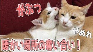 猫に電気毛布を買ってあげたらいきなり縄張り争い勃発?!