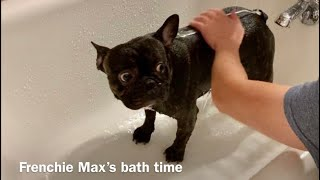 Frenchie Max's bath time (not so easy to bathe a French bulldog! Too much energy!)