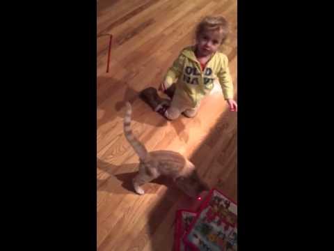 Katrina & QBert the kitten play with a laser