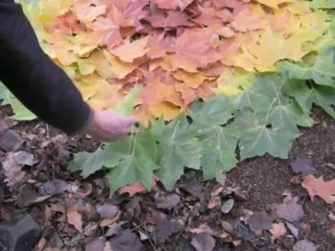 Préférence Landart : créer une oeuvre, un dégradé de feuilles d'arbre - YouTube UC84