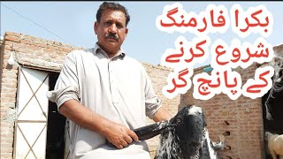 How to start goat farming in Pakistan|Goat farming tips|Bakra farming|Goat farm|Goat business idea