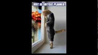 Самые смешные фото кошек #1 приколы камеди клаб +100500