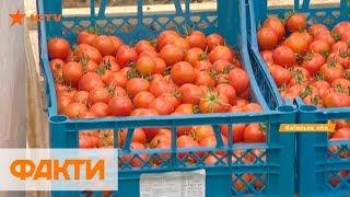 Помидоры черри и зелень: как выращивают екоеду в Украине