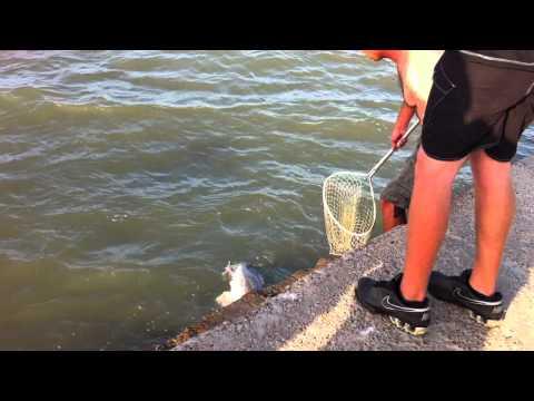 Port Aransas= Huge fish