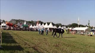 Demo voltige vereniging De Woudruiters tijdens de landbouwbeurs Vlagtwedde 2019