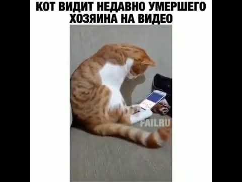 Очень грустное видео до слёз. Кот плачет по умершему хозяину. На видео