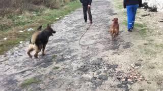 Socialisation chien peureux 😨😨😨