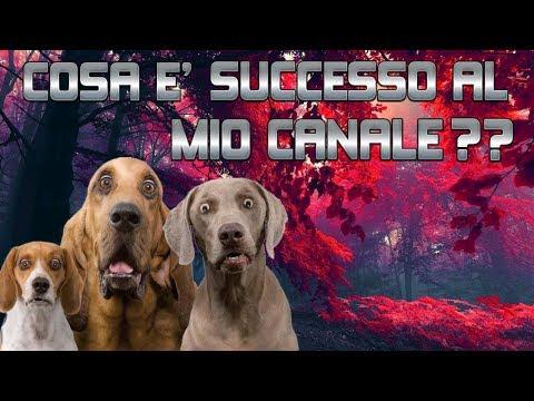 ATTENZIONE - WARNING : INFORMAZIONI IMPORTANTI SUL MIO CANALE!